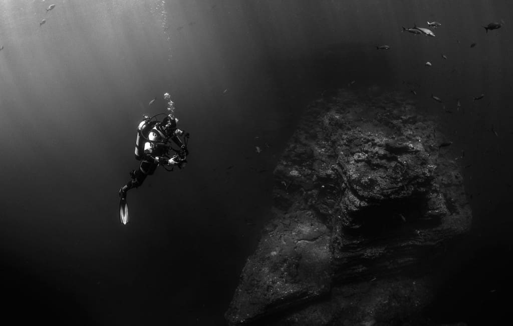 Cuba Diver Being Curious